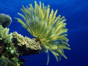 Vida en el océano