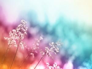 Plantas en una imagen de colores