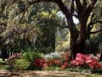Bellas flores bajo un gran árbol