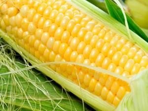 Un maíz amarillo