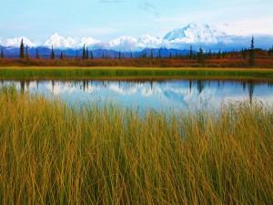 Calma en el estanque (Parque Nacional de Denali)