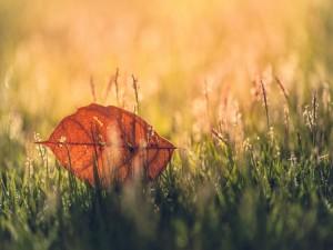 Hoja otoñal sobre la hierba