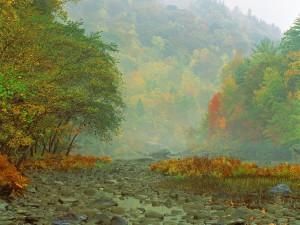 Niebla a orillas de un río