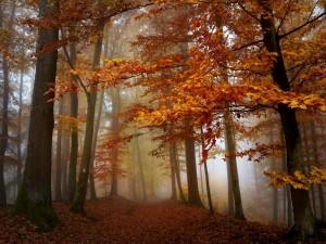 Niebla en el bosque otoñal