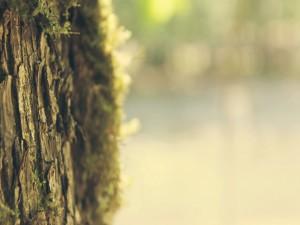 El tronco de un árbol