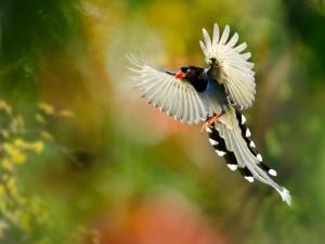 Pájaro batiendo las alas