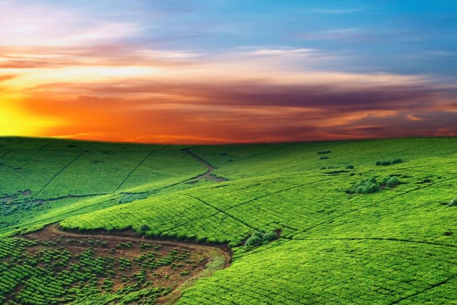 Amanece sobre un campo verde