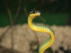Una bonita serpiente