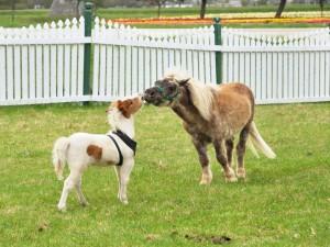 Adorables caballos poni