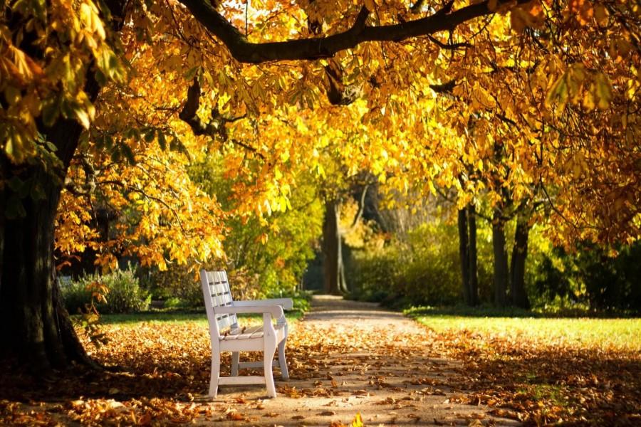 Banco blanco en un soleado día de otoño