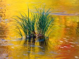 Hierba en el agua