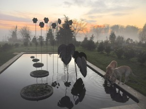Una mañana de invierno con niebla en el Parc Botanique (Alain Jouno)