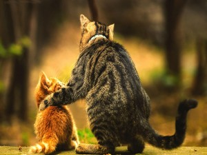 Gatito junto a su mamá