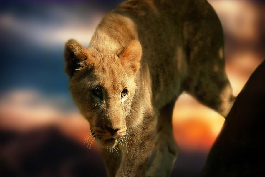 Bonito cachorro de león