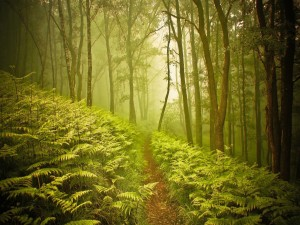 Niebla en un bosque de helechos