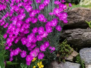 Preciosas flores color púrpura