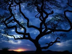 Silueta de un árbol a la hora del crepúsculo