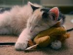 Un lindo gatito descansando encima de un peluche
