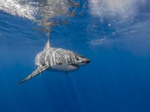 Tiburón en aguas poco profundas