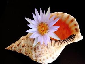 Una caracola y una flor