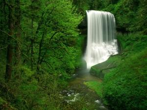 Hermosa cascada en un bosque verde
