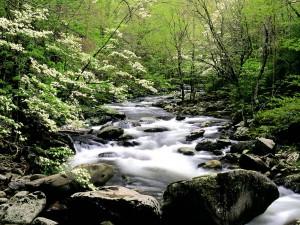Río fluyendo por un bosque en primavera