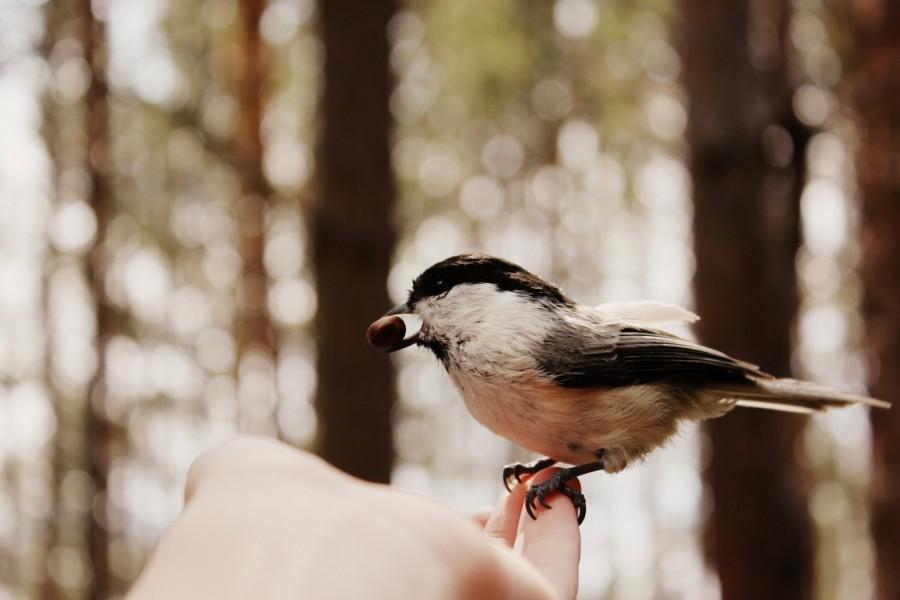 Pájaro con un fruto en el pico