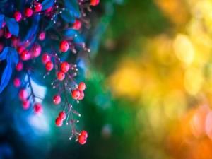 Bayas rojas en las ramas de un árbol