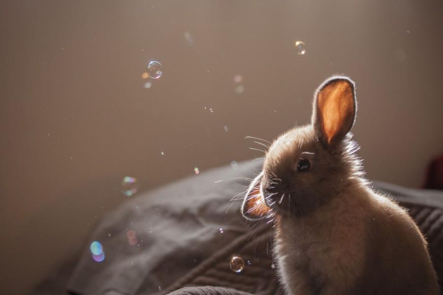 Pompas de jabón flotando junto a un conejo