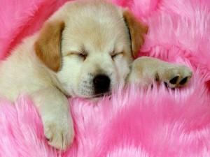 Adorable cachorro durmiendo