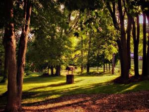 Villa con frondosos árboles y un pozo