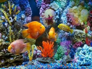 La belleza del mundo submarino