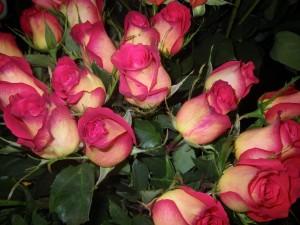 Manojo de rosas hermosas