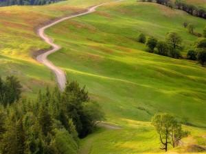 Camino entre hierba y arbustos