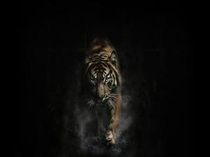 Un tigre en la oscuridad
