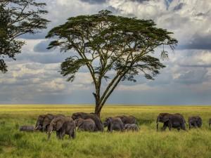 Manada de elefantes caminando sobre la hierba fresca