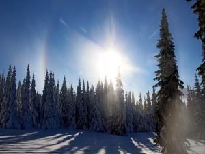 Efecto de halo óptico sobre el bosque de los Urales en invierno