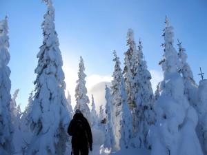 Caminando a través de un bosque cubierto de nieve