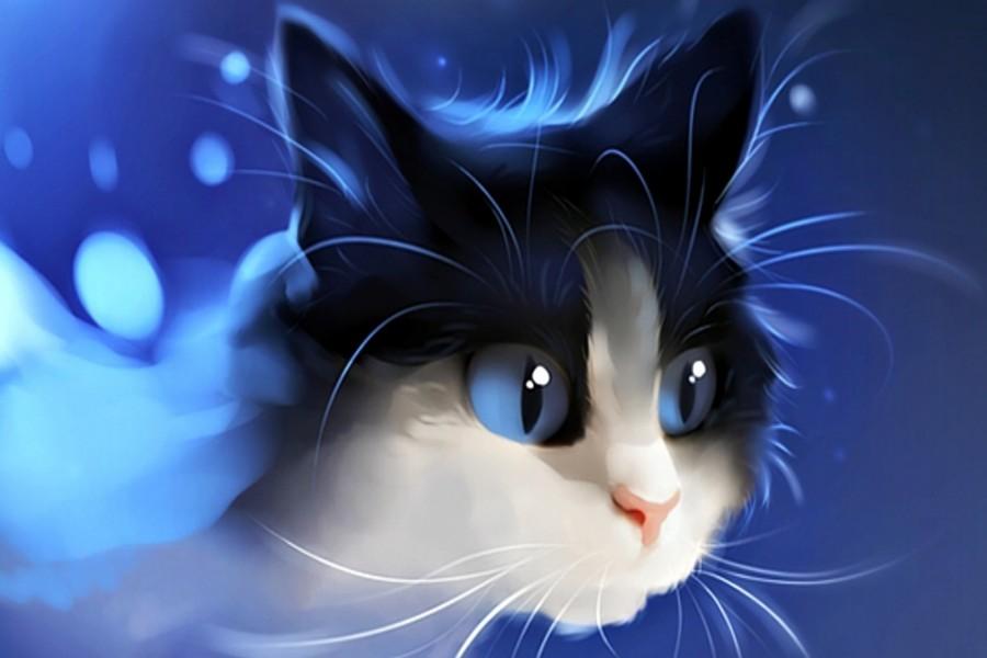 Gatito sobre un fondo azul