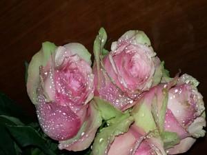 Manojo de rosas de color rosa con gotas de agua
