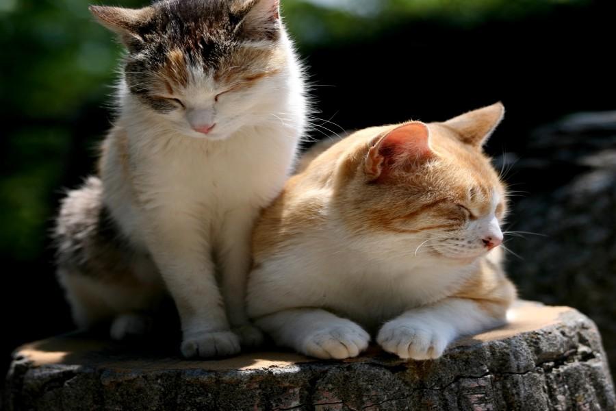 Dos gatos dormitando al sol en un tocón de árbol