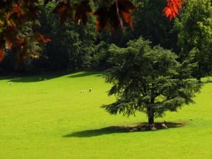 Ovejas comiendo en el prado verde
