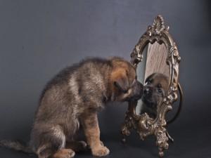Un cachorro mirándose en el espejo