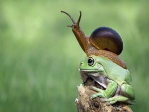 Un caracol descansando sobre una rana