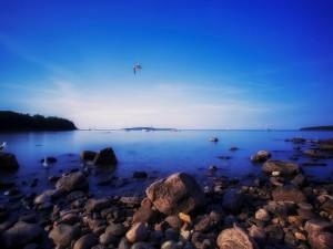 Gaviotas en la costa rocosa