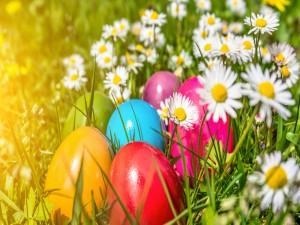Huevos de Pascua entre margaritas blancas