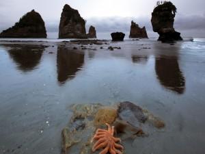 Estrella de mar en la costa rocosa