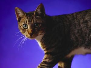 Un gato curioso