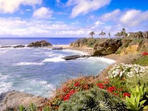 Flores y palmeras en la costa