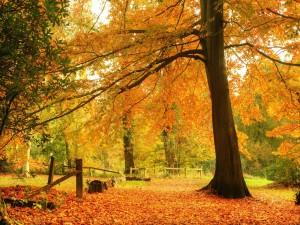 Hermoso paisaje en otoño